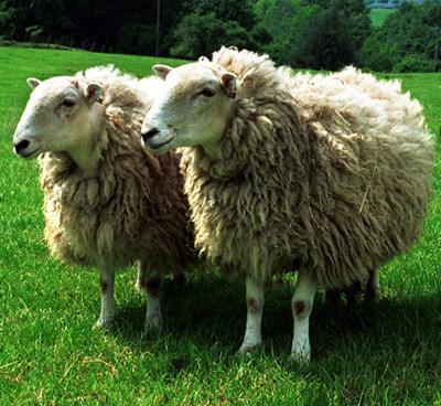 Клонирование..